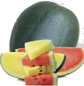 Seeds Watermelon Red&Yellow Pulp Mix Giant Fruits Organic Heirloom Ukraine