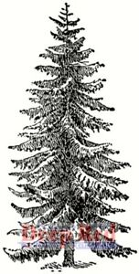 Deep Red Stamps Spruce Tree Rubber Cling Stamp