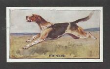 1926 Uk George Vernon Stokes Dog Body Art Sanders Custard Card English Foxhound