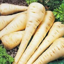 Seeds Parsnip Pasternak Power Hormone Vegetable Organic Heirloom Russian Ukraine