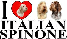 I LOVE ITALIAN SPINONE Dog Car Sticker By Starprint - Ft. the Italian Spinone