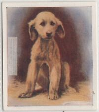 Afghan Hound Puppy Dog Pet Animal Canine 80+ Y/O Trade Ad Card