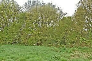 Land For Sale England /Scotland Choice Of Plot Agricultural/Woodland List + Info