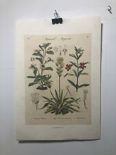FINE ART LITHOGRAPH: 1838 Botanica Magazine Reprint 20 x 14 Aguave