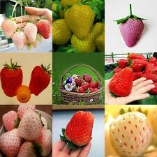 Heirloom 8 kinds large variety mix strawberry seed 200 seeds Plants home Garden