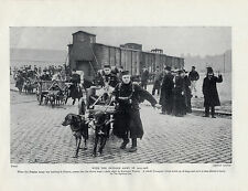 BELGIAN ARMY TRANSPORT DOG CARTS 1914 1918 WAR ORIGINAL DOG PRINT PAGE FROM 1934