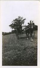 PHOTO ANCIENNE - VINTAGE SNAPSHOT - CHEVAL DE TRAIT ATTELAGE PAYSAN - HORSE