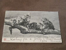 1903 fr cat postcard - Kittens sitting on a branch