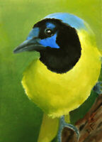 DONNA FRANCIS Original Aceo 3.5x2.5 GREEN JAY Painting Art Bird Abstract