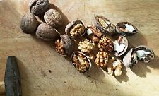 Greek Raw Walnut Kernels  Organic Nuts 1960 g Premiun Quality - New Harvest 2018