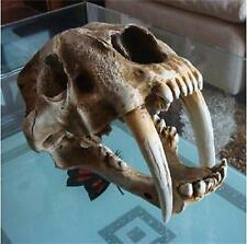 New Saber Tooth Cat Tiger Skull Sabertooth Smilodon Fatalis Model White Color