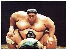 Photographie Cole - 1991 Angleterre Londres Combat de Sumo Royal Albert Hall