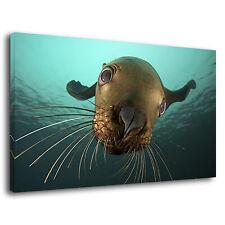 Funny Seal Sea Lion Sea Animal Underwater Scene Canvas Wall Art Picture Print