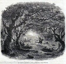 Antique print forest Abyssinia Ethiopia Africa  1858