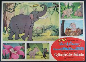 fotobusta cartoon GOLIA PICCOLO ELEFANTE abbinato a IL CASO DEL CAVALLO... 1964