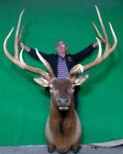 New Elk Taxidermy Head, Trophy Huge Canadian Bull!#S5 Deer Antler Chandelier