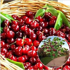 20Pcs Cherry Seeds Organic Seed Fruit Seeds Bonsai Tree Home Garden Plant