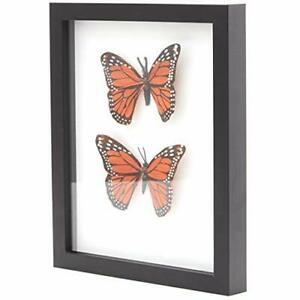 """8x10 Shadow Box Display Case 1.25"""" Depth Elegant Wood Picture Frame by Eucatus"""