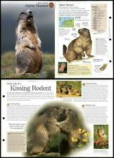 Alpine Marmot #276 Mammals - Discovering Wildlife Fact File Fold-Out Card