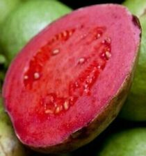 Psidium Guave Apple Red Guava, 20 Samen, 20 seeds