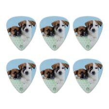 Jack Russell Terrier Puppies Dogs Box Novelty Guitar Picks Medium - Set of 6