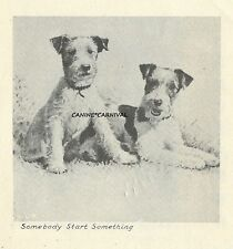 Morgan Dennis 2 Happy Fox Terrier Dogs 1946 Scarce Small Art Print