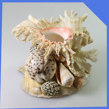 Big Beige White Yellow Cream Pink Natural Shell Seashell Composition Home Decor