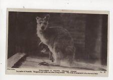 Wallaroo & Young Vintage RP Postcard 247b