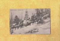 CO Telluride 1908-29 antique postcard MOUNTAIN SHEEP COLORADO