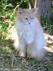 1 PRINTED PHOTO TO SPONSOR PEACHES RAINBOW BRIDGE CAT RESCUE DONATION