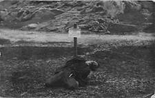 CPA GUERRE VERITABLE CARTE PHOTO D'UN ESPION BULGARE FUSILLE LE 24 12 1916 A MON