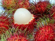 10 seeds fresh tropical Rambutan tree/plant/fruit samen Nephelium lappaceum 2017