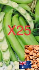 25 Seeds Broad Bean 'Aquadulce' Garden Vegetables Plant Fava Faba