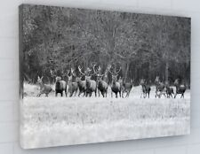 STUNNING ANIMALS DEERS STAG BLACK CANVAS PICTURE PRINT CHUNKY FRAME LARGE 2259-2