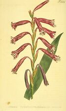 Curtis's Botanical Magazine on Cd Vintage Floral Art 1053 Images