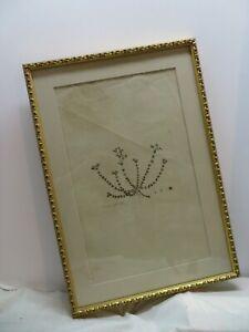 Antique Botany print Arenaria Serpyllifolia William Curtis ? Watermarked