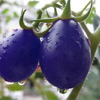 20pcs Garden Seeds Lila Kirschtomate Organisch Heirloom Frucht Gemüse Pflan G5W6