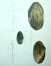 Fruits del mar Decoración restaurantes Conchas conchas Litografía siglo XIX