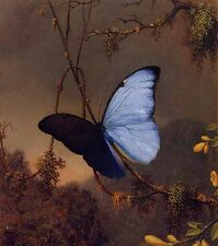 Huge art Oil painting Martin Johnson Heade - Blue Morpho Butterfly insect canvas