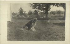 Collie Dog on Lawn c1910 Real Photo Postcard