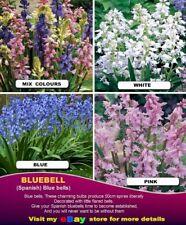 SPANISH Bluebells  BULBS- White- Pink- Blue & Mix Colors- 20x BULBS