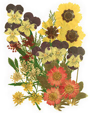 pressed flowers mixed pack, pansy marguerite lace flower foliage for floral art