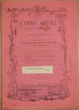 L'UMBRIA AGRICOLA 15 30 LUGLIO 1890 VINI MOSTO STALLONE MELTON VITE PERONOSPORA