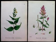 Engraving Realism Botanical Art Prints