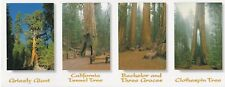 Yosemite National Park Mariposa Grove Collage ~ Modern Post Card 4x10 ~ New