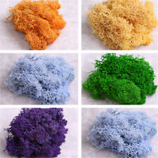Natural Norwegian Reindeer Moss Preserved Dried Craft Flower Artificial decorate