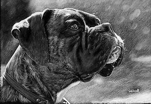 A4 A3 A2 Intellectual (Black & White) Boxer Dog Art Print of drawing -RussellArt