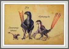 DINOSAUR Scansoriopterygidae CHINA Hebei 辽宁 Liaoning 河北 Prehistoric BIRD card #1