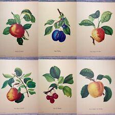 """VTG '50 Penn Prints """"Antique French Fruits"""" 12"""" Full Color Pomology Botany Set 6"""