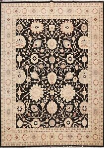 Floral Traditional Peshawar-Chobi Oriental Area Rug Hand-knotted Classic 8'x10'